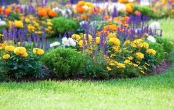 mo-botanical-garden